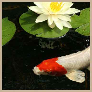 Koi Pond, Backyard Pond