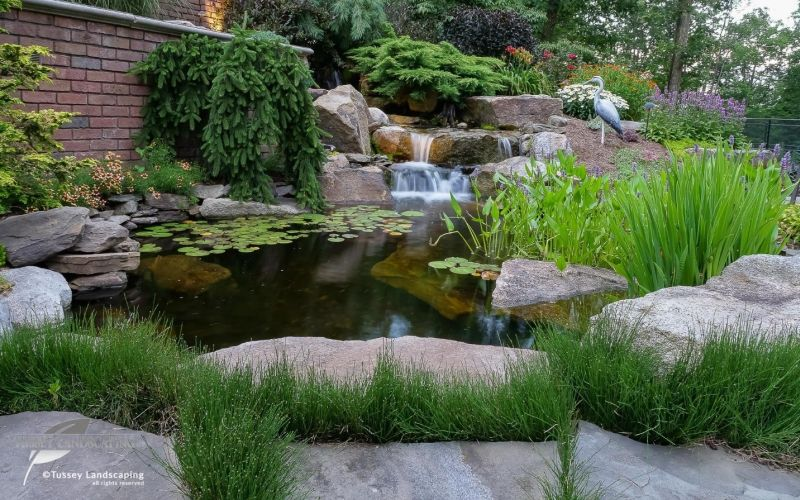 backyard pond with rocks and waterfall