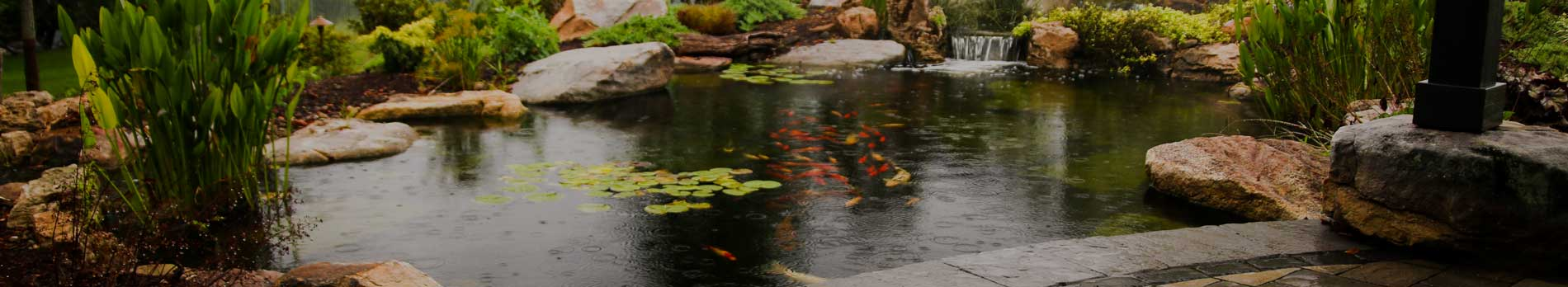 Koi Pond with Clear Water | State College Pa | Tussey Landscaping