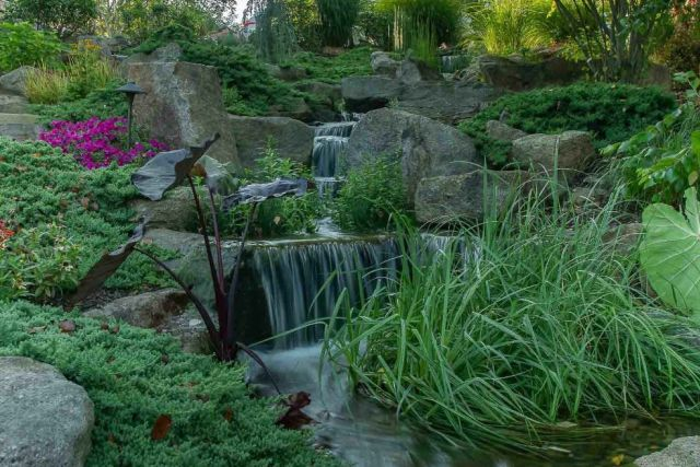 Water garden with rocks, plants, and waterfall.